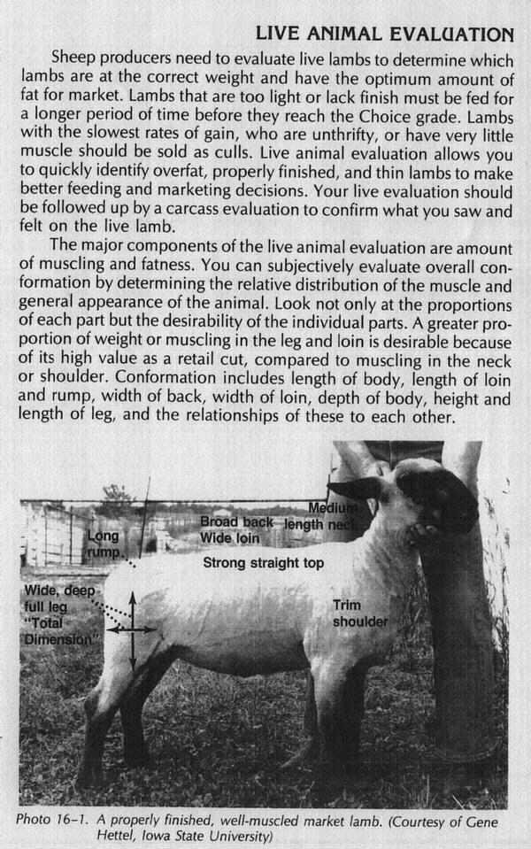 Sheep Page Image