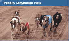 Grey Hound Racing Image